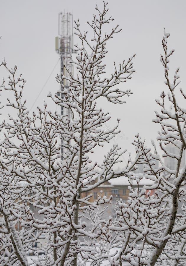 Drzewo śmiecący z pierwszy śnieżną samotną pozycją w odległości od domów fotografia stock