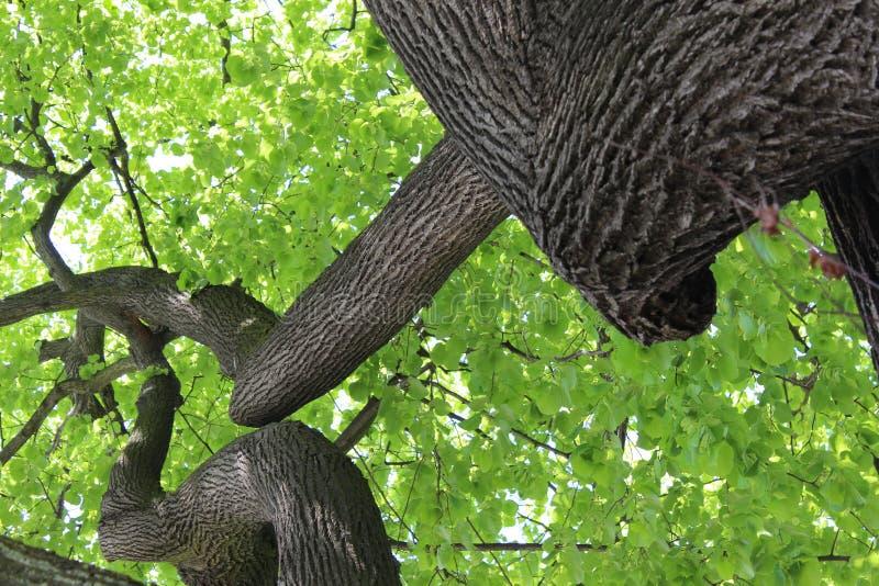 Drzewo życie obraz royalty free