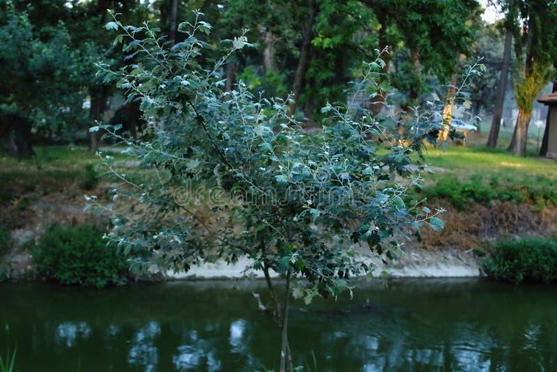 Drzewo życie zdjęcia royalty free