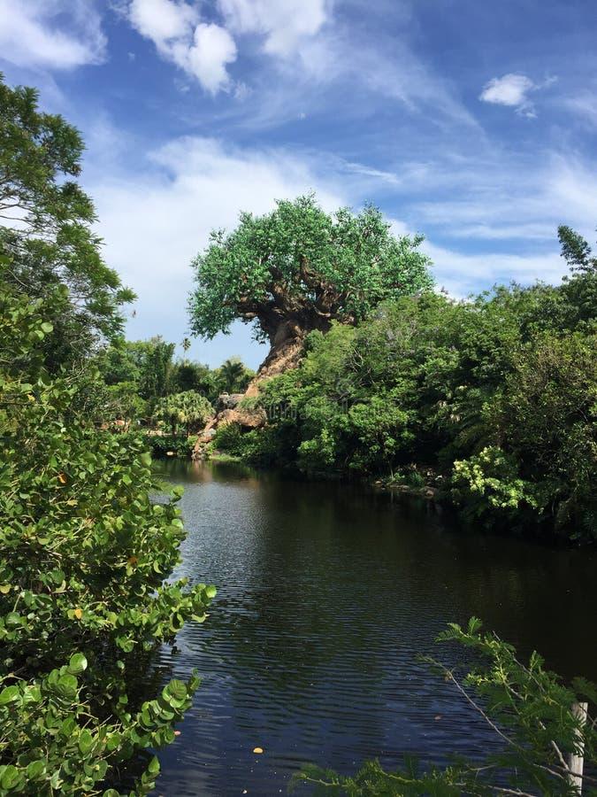 Drzewo życie przy Zwierzęcym królestwem fotografia royalty free