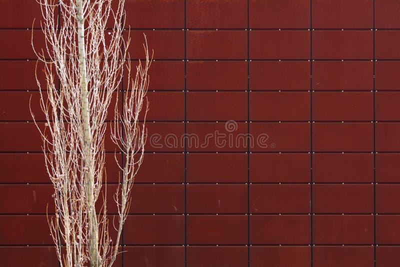 Download Drzewo zdjęcie stock. Obraz złożonej z drewno, tekstura - 13334500