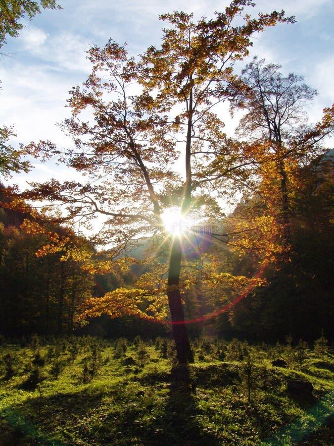 Download Drzewo zdjęcie stock. Obraz złożonej z fielder, kończyny - 134748