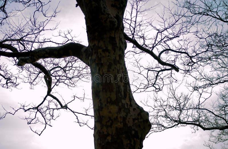 Download Drzewo zdjęcie stock. Obraz złożonej z 1, gałąź, kwiat - 138138