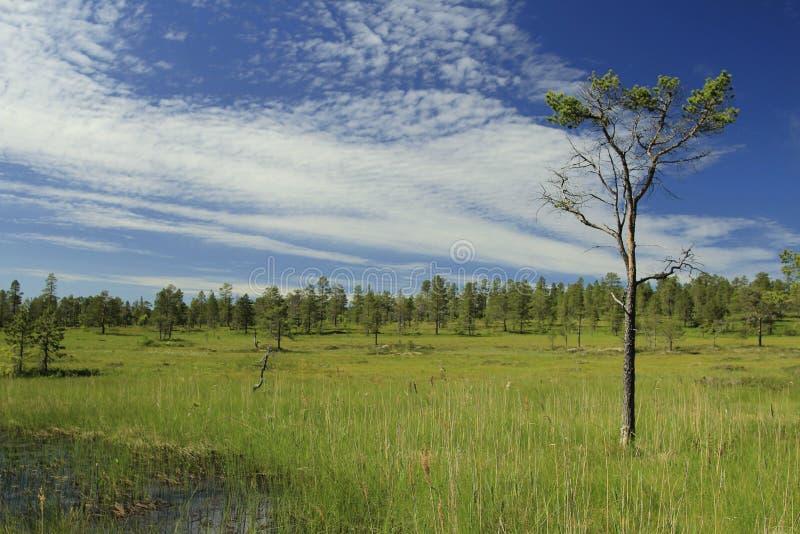 Download Drzewo obraz stock. Obraz złożonej z niebo, słońce, chmury - 57666581
