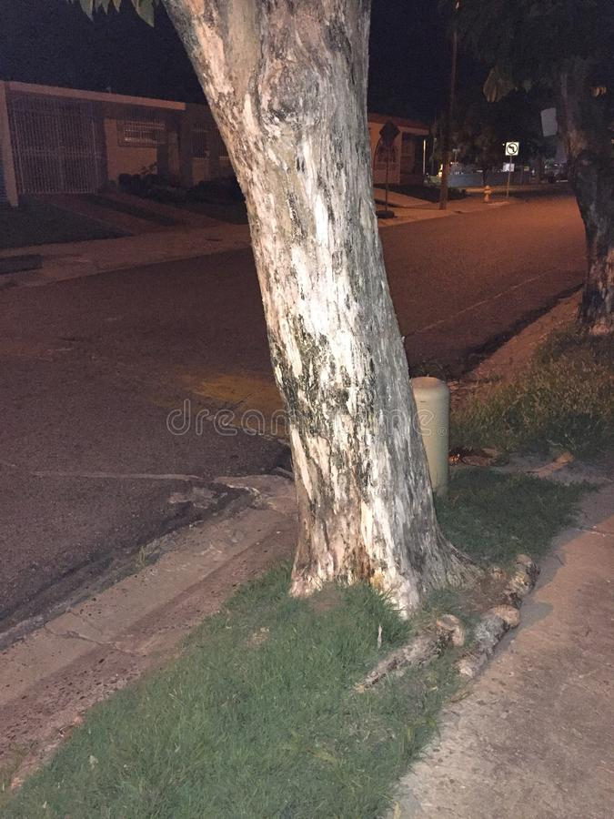 Drzewo fotografia stock