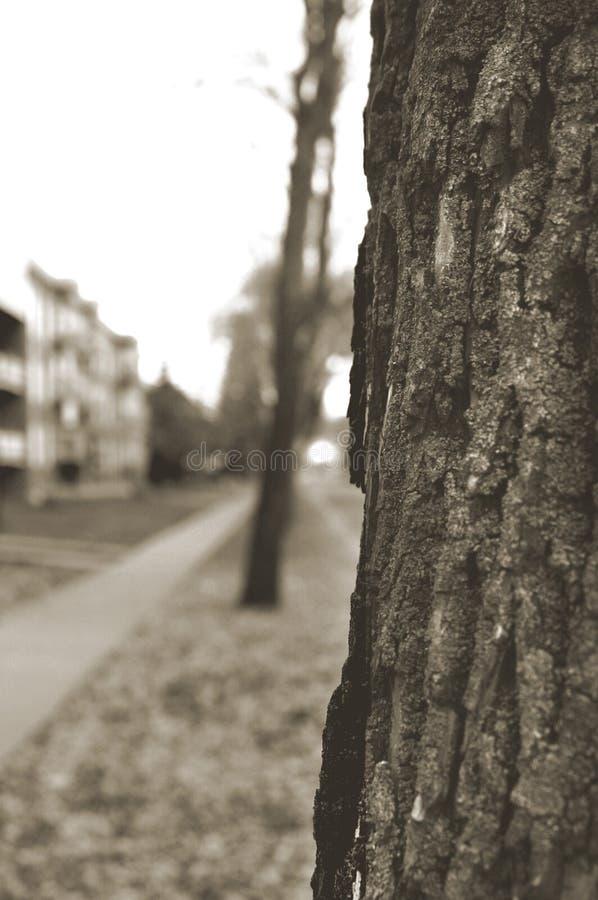 Download Drzewo obraz stock. Obraz złożonej z zaciemnia, bagażnik - 93557