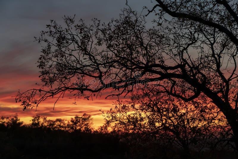 Drzewo bez liści przeciw światłu przy zmierzchem, zdjęcia royalty free