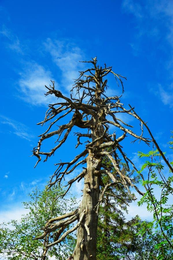 Download Drzewo bez liści zdjęcie stock. Obraz złożonej z pragnący - 53786224