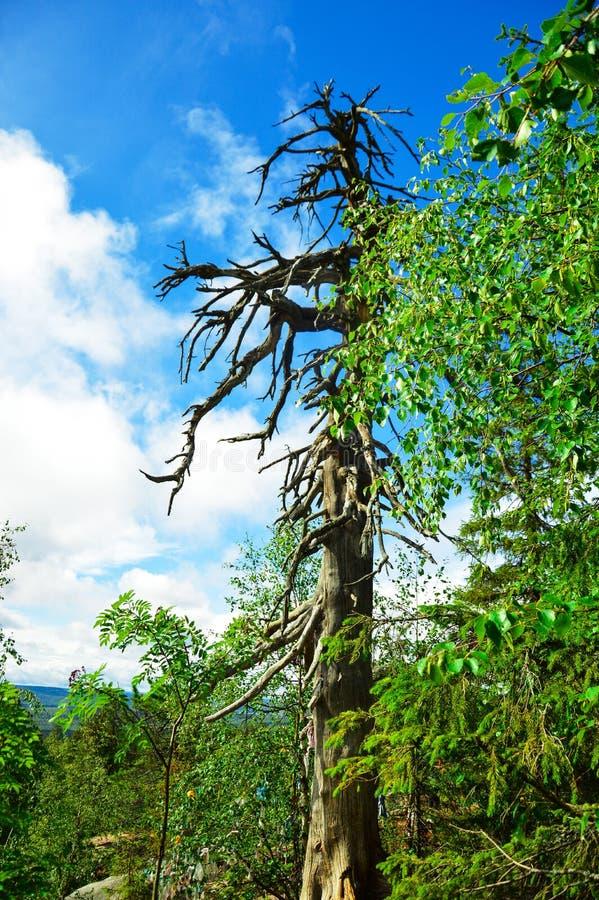 Download Drzewo bez liści zdjęcie stock. Obraz złożonej z natura - 53786228