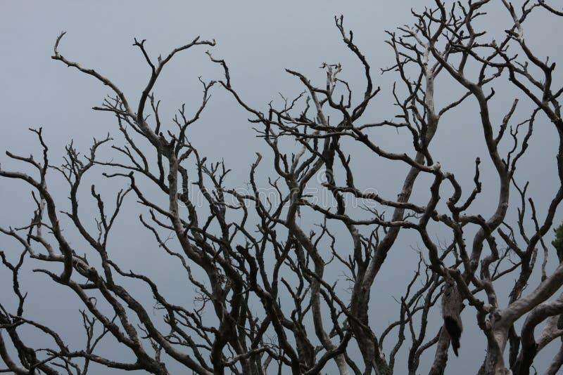 Drzewo bez urlopu zdjęcia royalty free