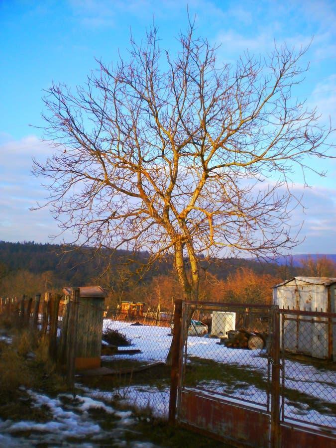 Drzewo blisko miasta obraz royalty free