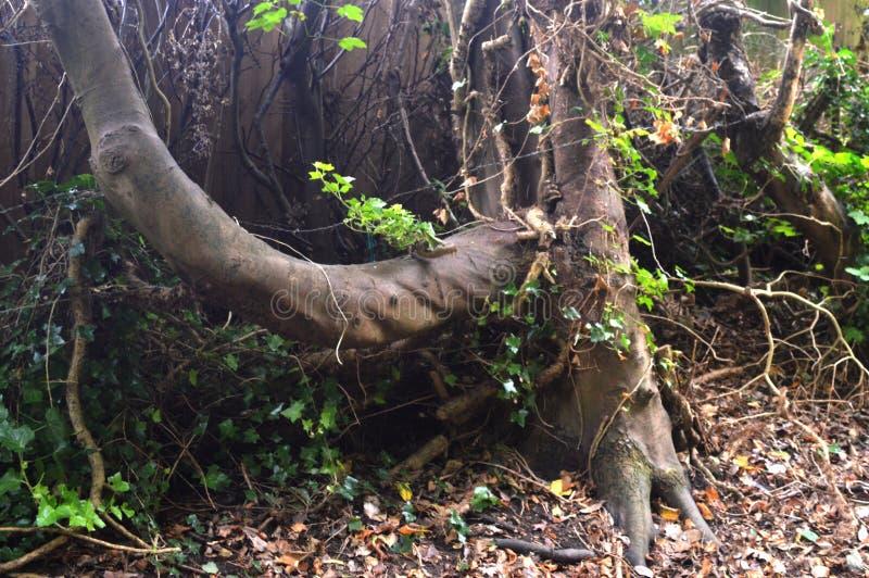 drzewo dziki zdjęcie royalty free