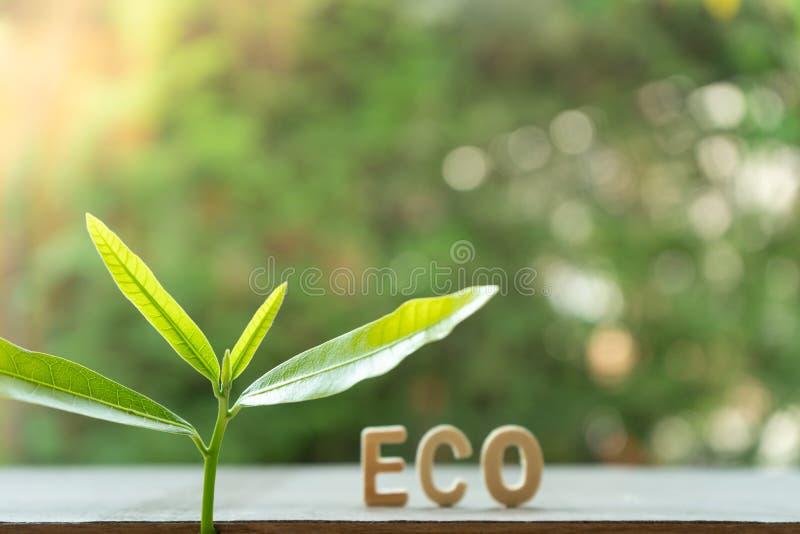 Drzewo, eco tex z zielonym tłem obrazy stock