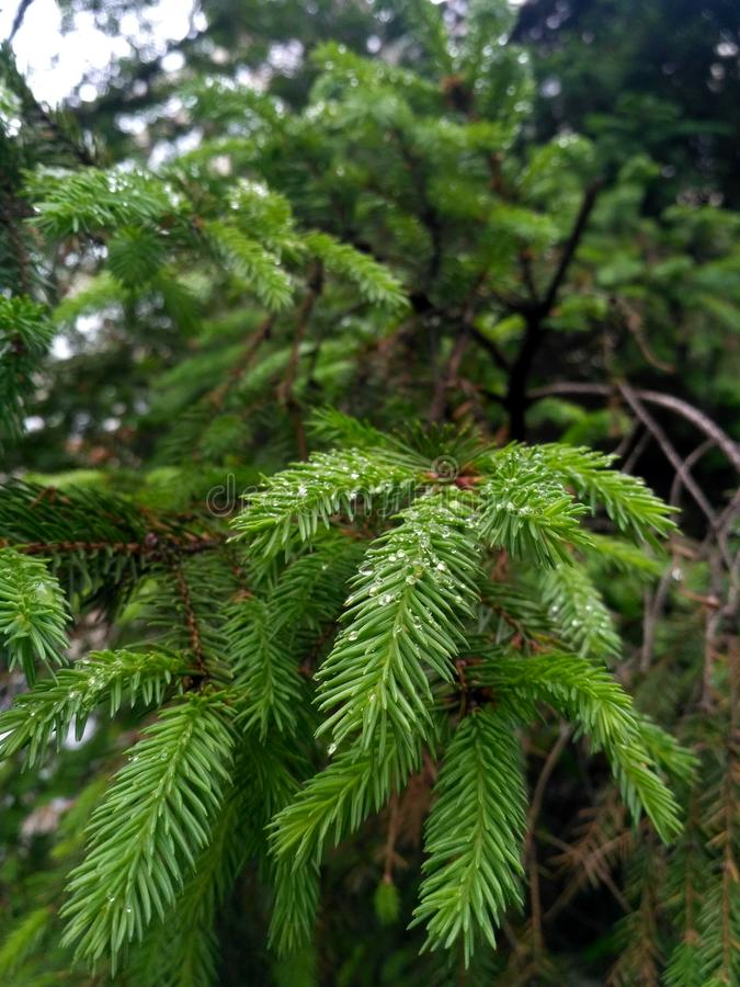 Drzewo i deszcz zdjęcie stock