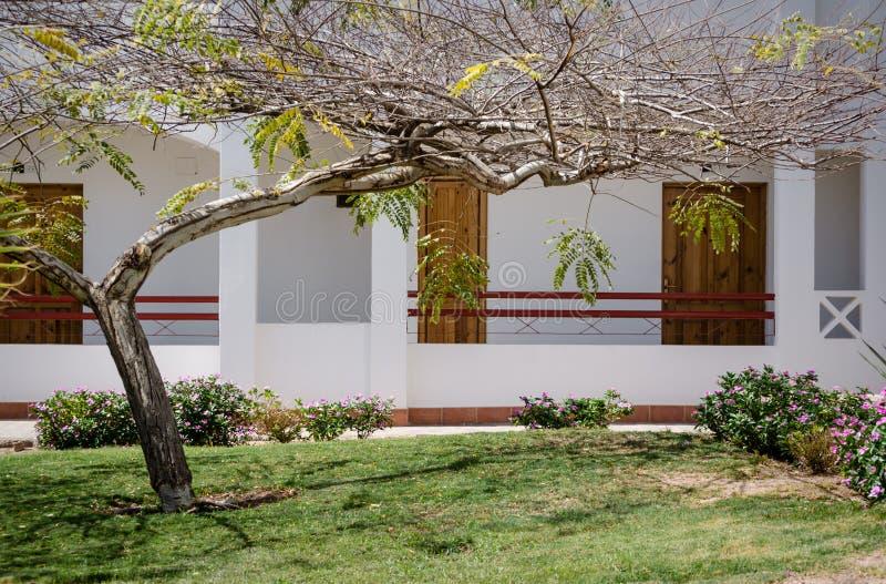 Drzewo i gazon z zieloną trawą i kwiatami przeciw białemu domowi w Egipt Dahab południe Synaj obraz royalty free