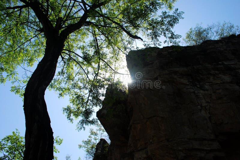 Drzewo i kamień obrazy royalty free