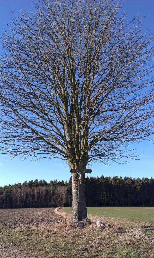 Drzewo i krucyfiks fotografia stock