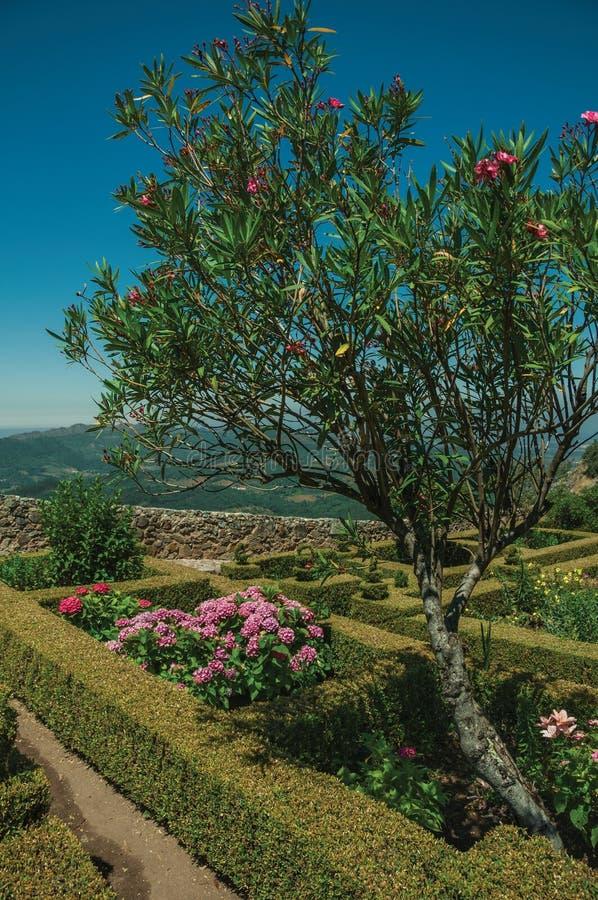 Drzewo i krzaki w kwitnącym ogródzie obok Marvao Roszujemy fotografia stock