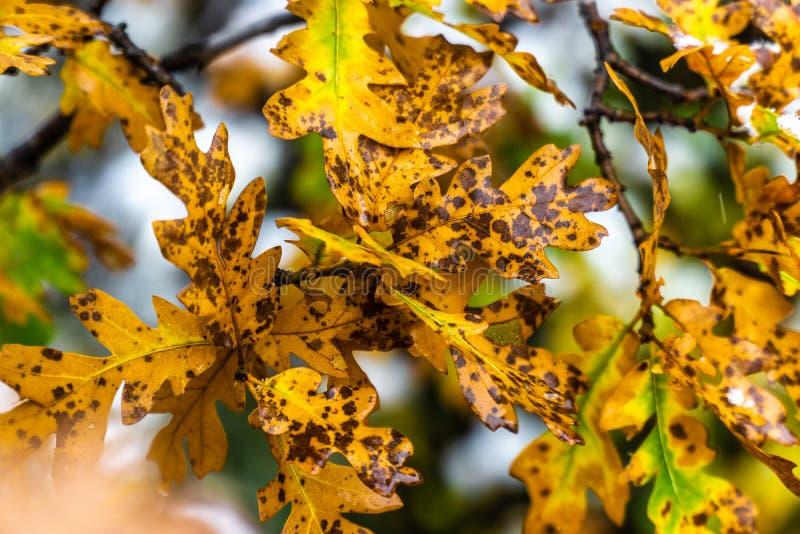 Drzewo i liście podczas spadek jesieni po deszczu zdjęcia royalty free