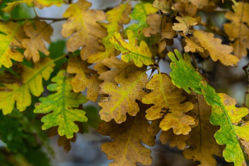Drzewo i liście podczas spadek jesieni po deszczu fotografia royalty free