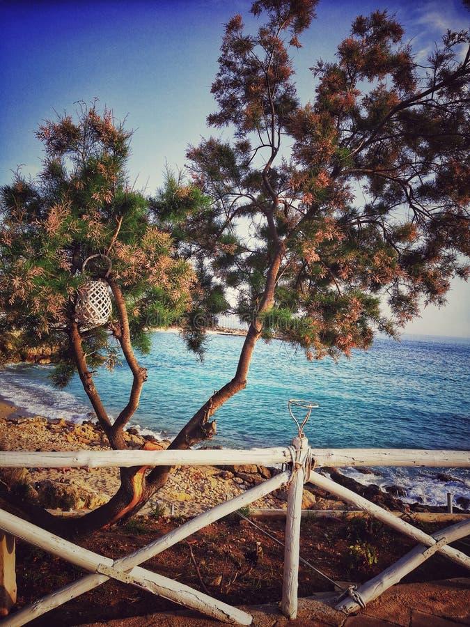 Drzewo i morze fotografia stock