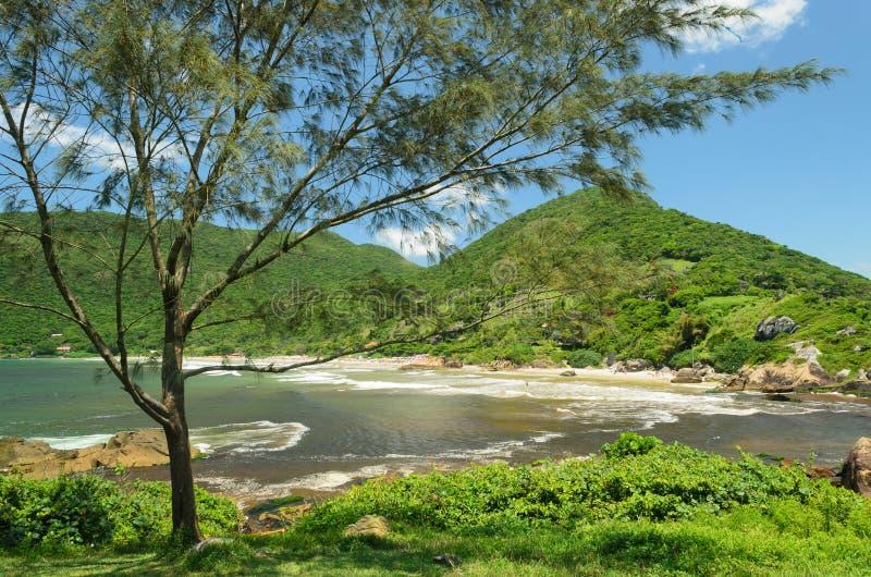 Drzewo i morze obraz stock