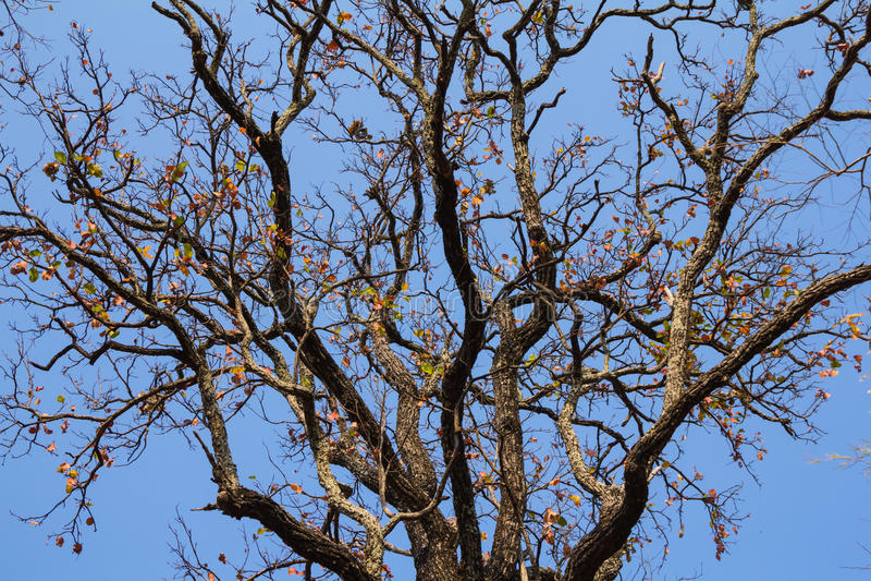 Drzewo i niebieskie niebo zdjęcie royalty free