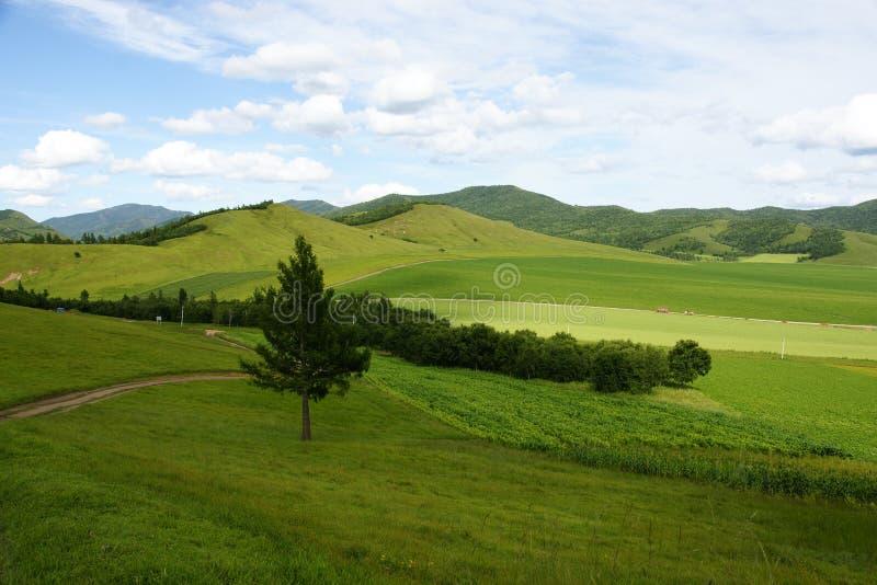 Drzewo i trawa obraz stock