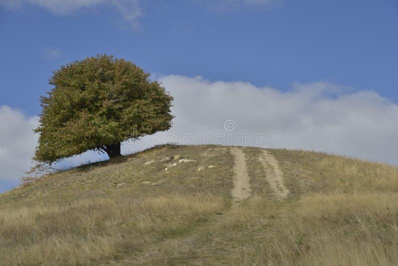 Drzewo i wiejska droga nad wzgórzem w wczesnej jesieni zdjęcia royalty free