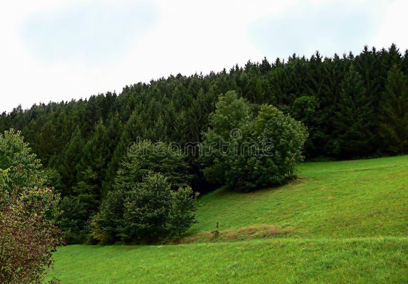 Drzewo jest odrewniałym bagażnikiem czyj gałąź tylko przychodzą out przy pewnym wzrostem od ziemi zdjęcia royalty free