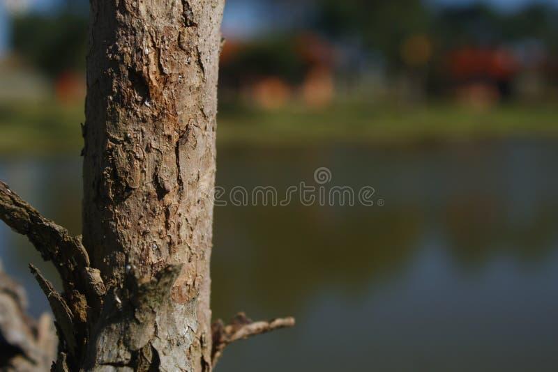 Drzewo jeziorem zdjęcia royalty free