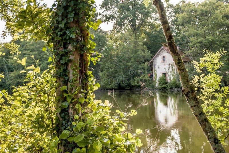 Drzewo jeziorem z odbijającym budynkiem obraz stock