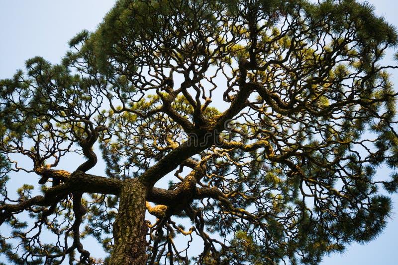 Drzewo komplikacja obraz stock