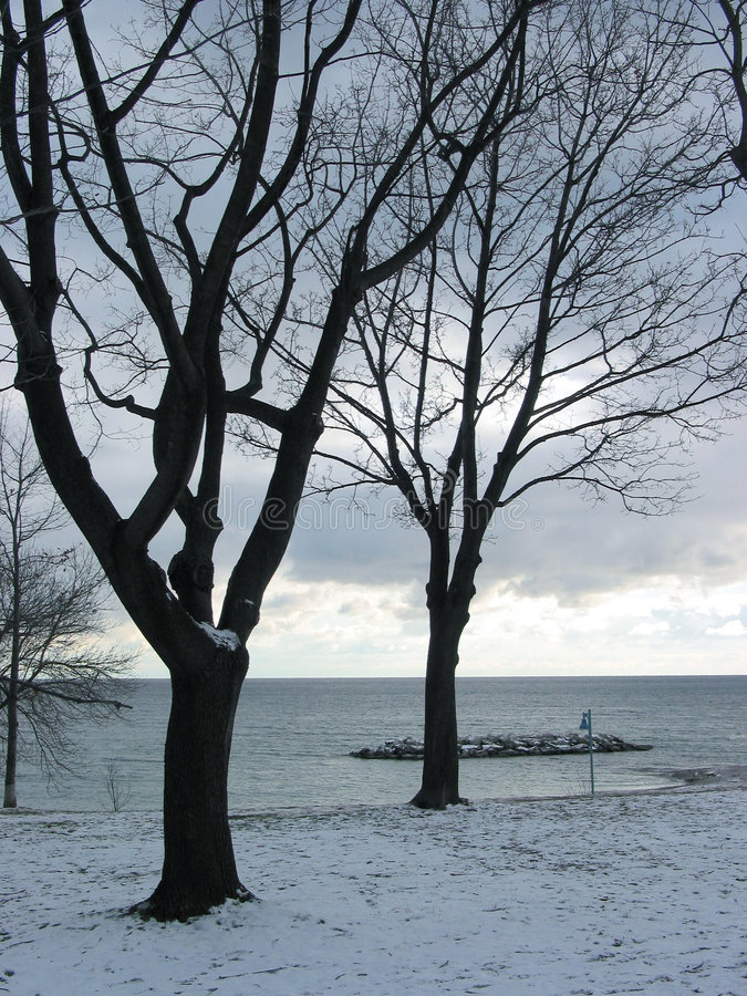 drzewo lakeshore zimy. fotografia stock