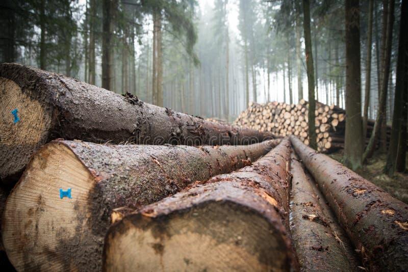 Drzewo, las, las, drewno zdjęcia royalty free