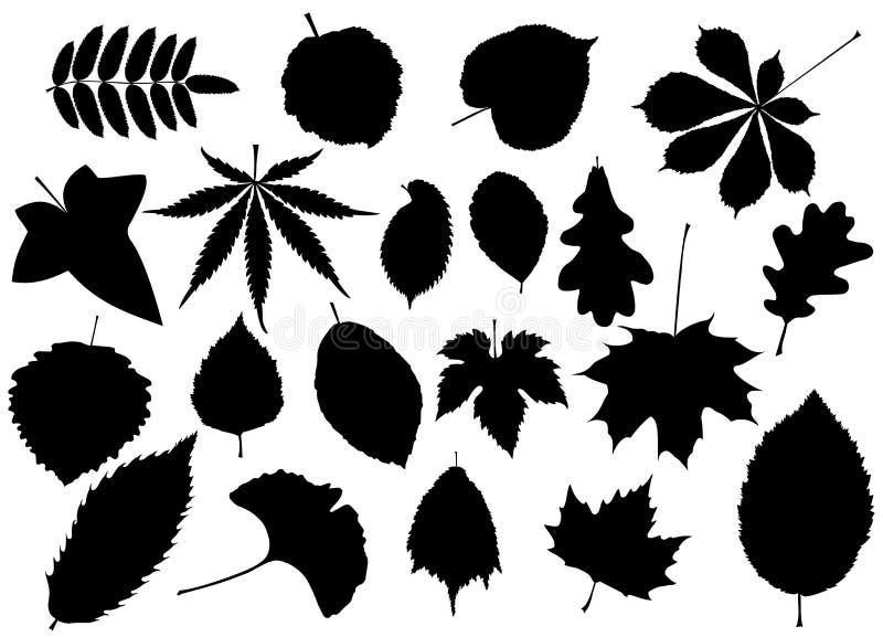 Drzewo liście ustawiający, ilustracji