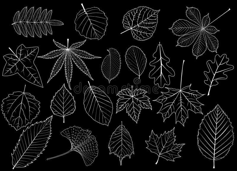 Drzewo liście ustawiający, royalty ilustracja