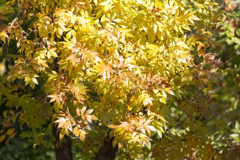 Drzewo liście w jesieni fotografia stock