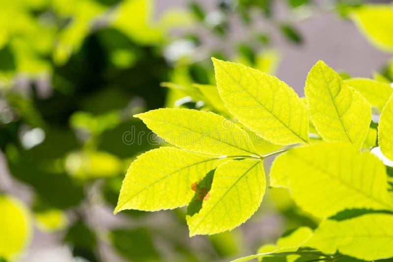 Drzewo liście w jesieni zdjęcie stock