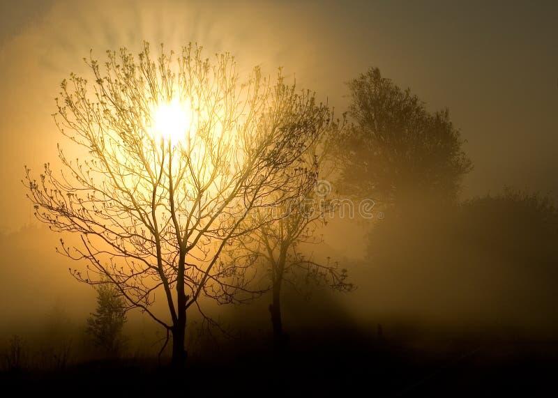 drzewo mgły słońca obrazy royalty free