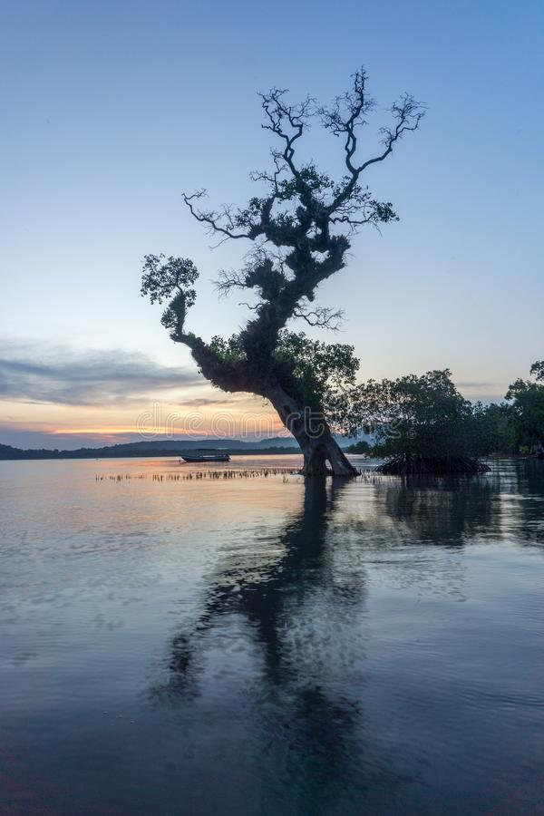 Drzewo na Bawean, Gresik, Indonezja zdjęcia stock