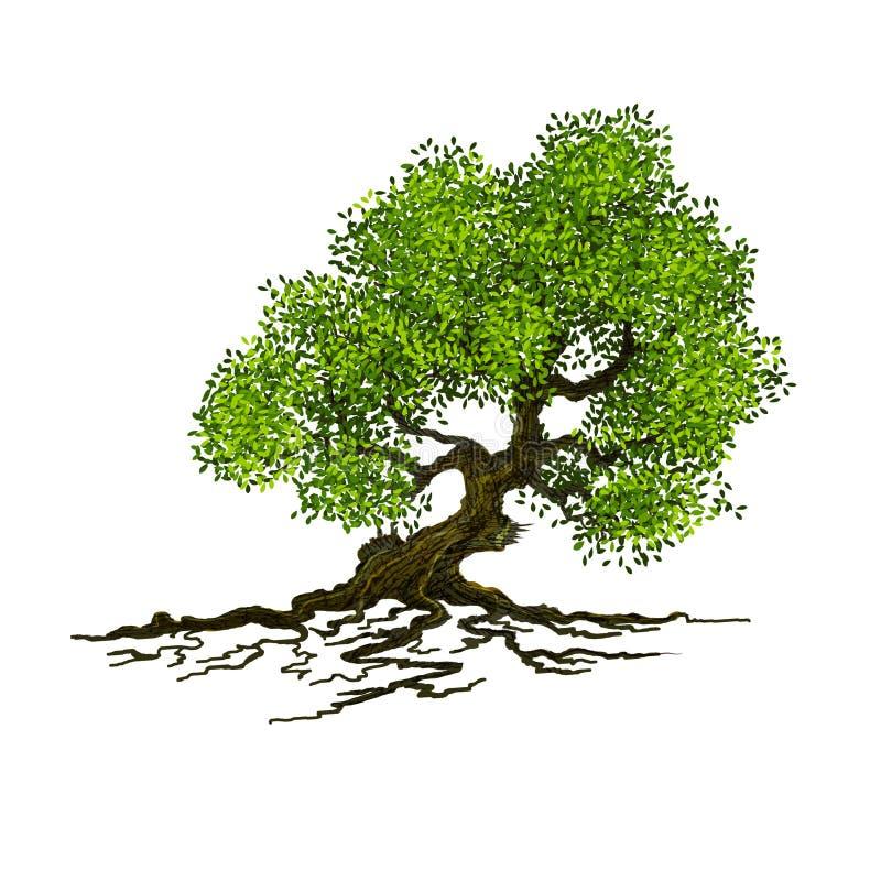 Drzewo na biały tle zdjęcia royalty free