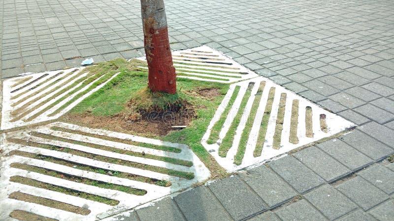 Drzewo na footpath fotografia royalty free