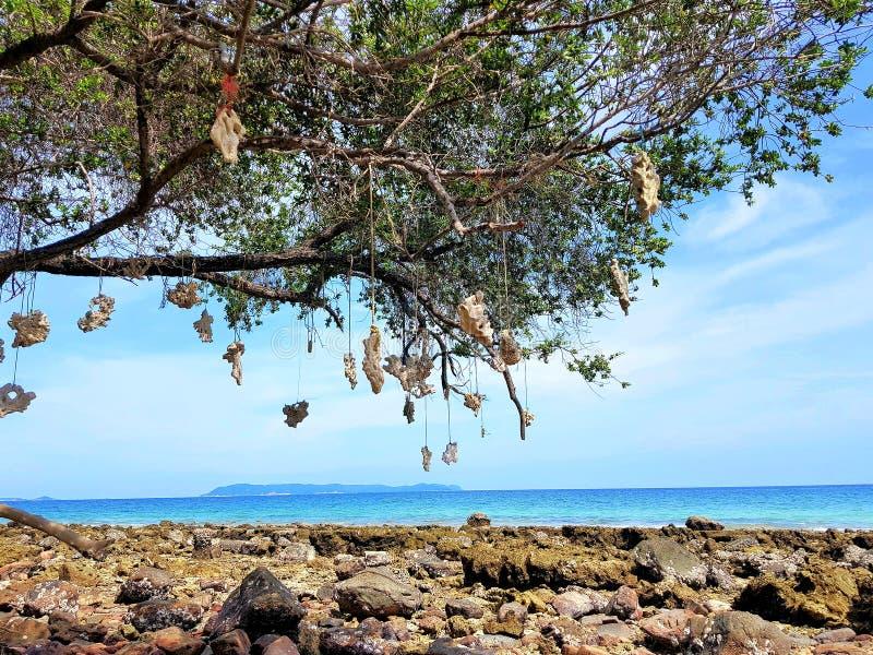 Drzewo na kamień plaży zdjęcie stock