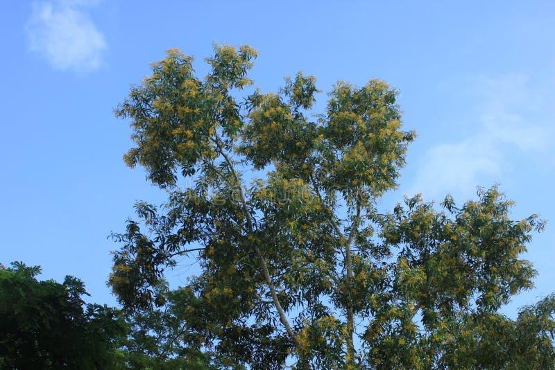 Drzewo na niebieskim niebie obraz stock