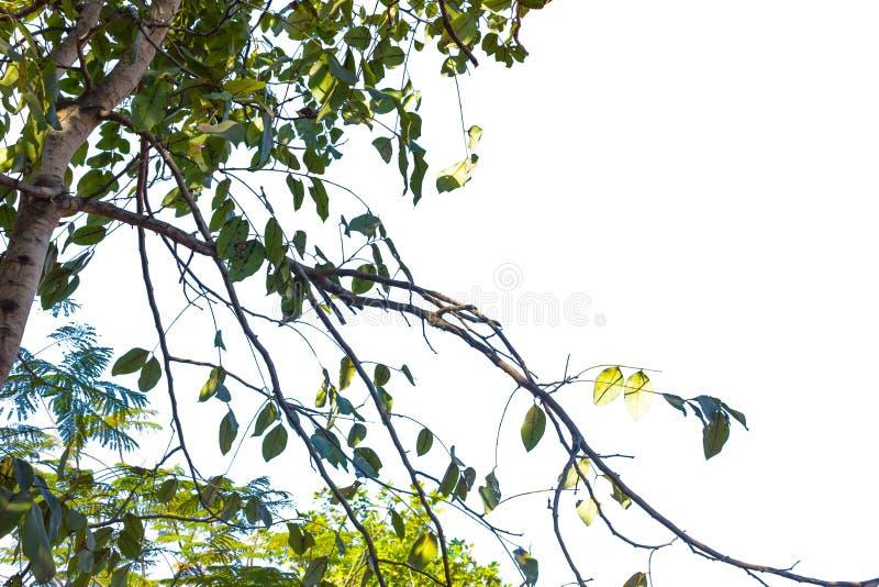 Drzewo na odosobnionym obraz royalty free