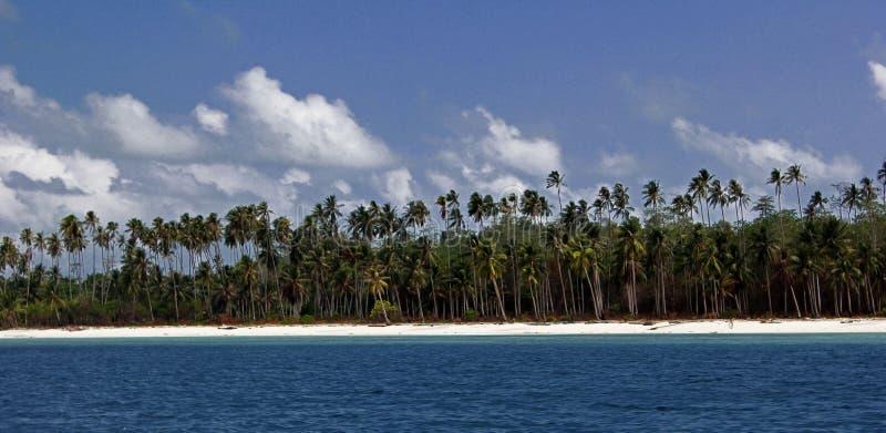 Drzewo na plaży zdjęcie royalty free