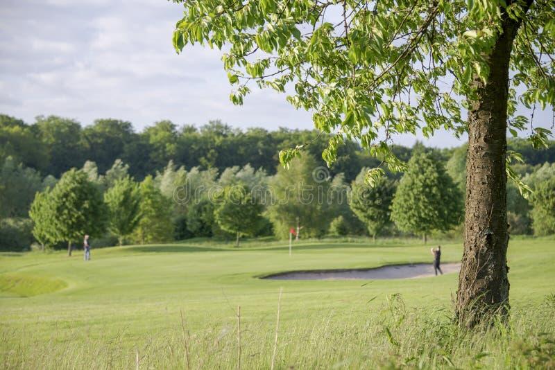 Drzewo na polu golfowym obraz royalty free