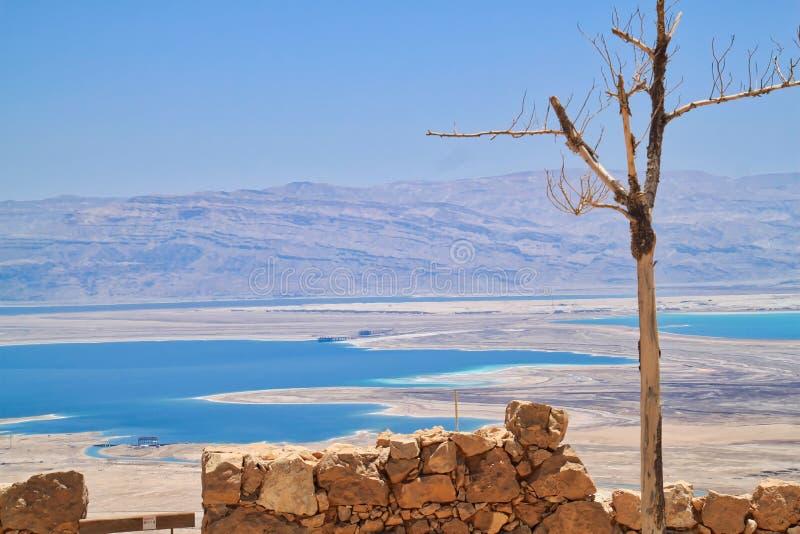Drzewo na przedpolu widok Nieżywy morze w Judejskiej pustyni jak widzieć od Masada obraz stock