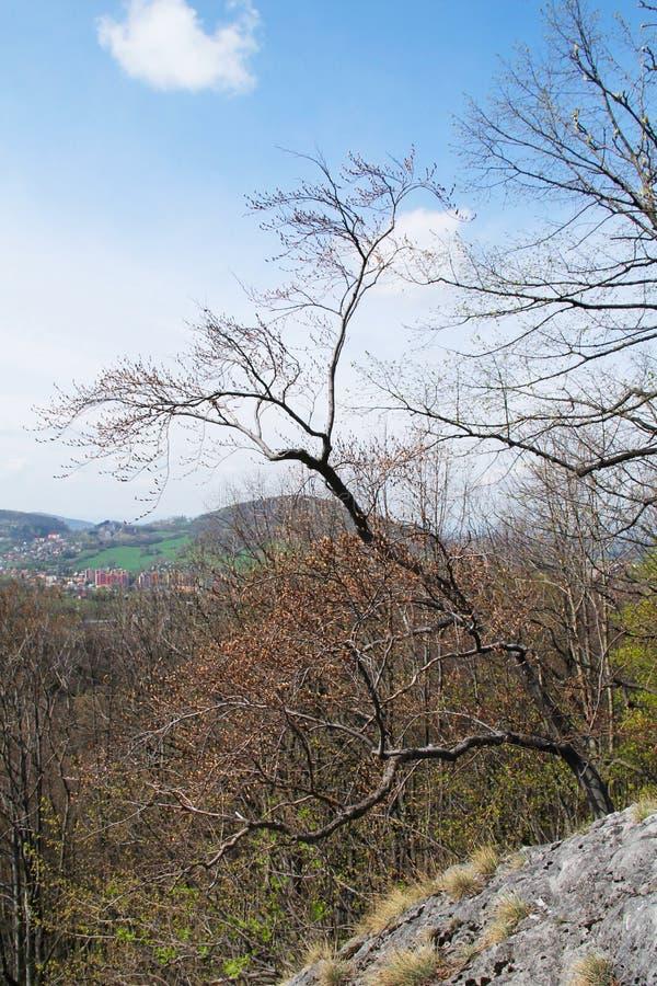 Drzewo na skale zdjęcia royalty free